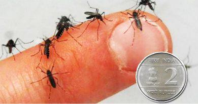 अब मात्र 2 रुपए में गायब होंगे सभी मच्छर, यकीन ना आए तो आजमा कर देख लीजिए