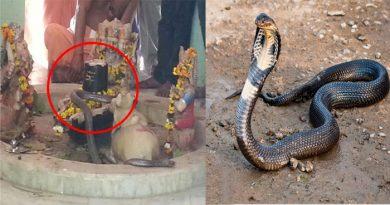 यह नाग है भगवान शिव का सच्चा भक्त, पिछले 15 सालों से हर रोज़ कर रहा है इस मंदिर में पूजा