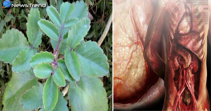 सभी रोगों का इलाज है यह पौधा, इसके फायदे जानकर हो जाएंगे हैरान